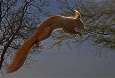 egern_
